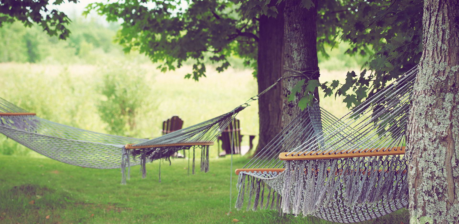 Jardin verdoyant avec hamacs