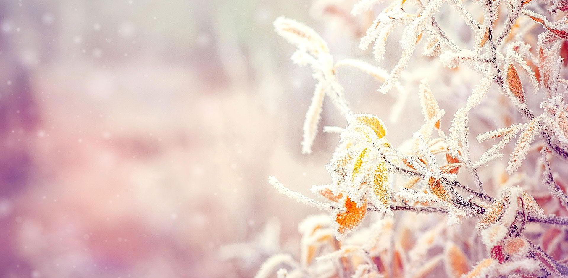 Branches et feuilles sous la neige