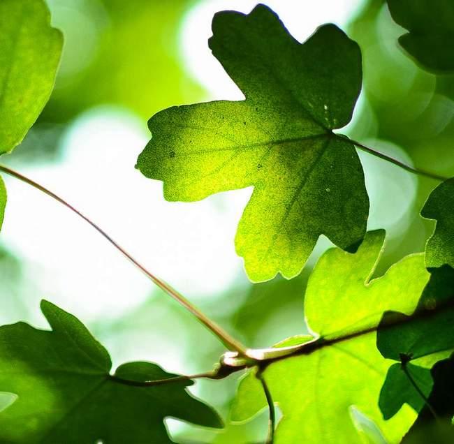 Des feuilles vertes dans la forêt
