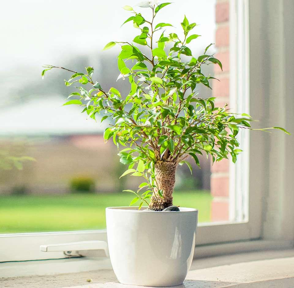 Plante verte devant une fenêtre